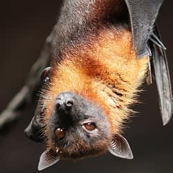 Hamilton has its first case of rabies from a bat bite in nearly two years