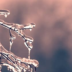 Frost advisory in effect for parts of Halton and Hamilton