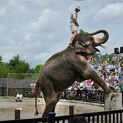 Hamilton's African Lion Safari named worst zoo for elephants in North America