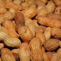 McMaster researchers discover 'transformative' peanut allergy treatment